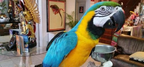 Parrot in Lobby